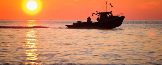 P.E.I.'s Western Gulf fishermen excited about highest lobster numbers from survey